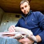 Habilitarán carnicerías para la venta de pescado durante Semana Santa
