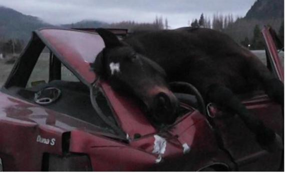 caballo accidente