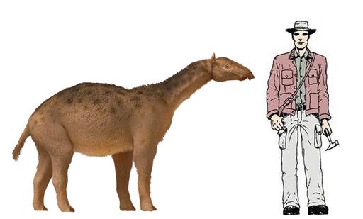 promacrauchenia-fosiles-hallados-en-miramar