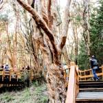 Los Parques Nacionales permanecerán cerrados por fuertes vientos