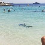Tiburón herido provoca pánico en playa y tuvo que ser sacrificado