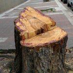 Ahora, para podar y extraer árboles se podrá pedir autorización a través de la web