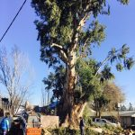 Hubo casi 300 intervenciones por el temporal de viento y hoy se trabaja para ordenar la ciudad