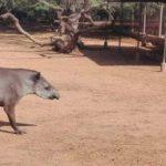 Venezuela: Robaron animales de un zoo y sospechan que fue para comerlos