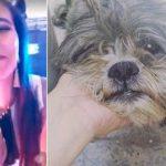 Indignante: atropelló a un perro y se filmó burlándose
