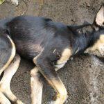 Alerta en Villa Ceferino por el envenenamiento masivo de animales