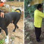 Un bebé fue enterrado vivo por su madre y un perro lo salvó
