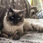 Atención: detectan segundo gato infectado con coronavirus