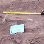 Un dinosaurio argentino podría convertirse en el ser terrestre más grande de la historia